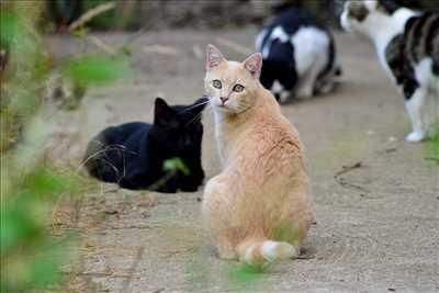 Exemple refuge animaux n°269 zone Côte-d'Or par NID'ACCUEIL