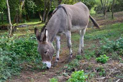 Photo refuge animaux n°271 dans le département 21 par NID'ACCUEIL