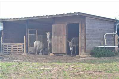 Photo refuge animaux n°274 à Dijon par NID'ACCUEIL