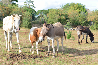Photo refuge animaux n°275 dans le département 21 par NID'ACCUEIL
